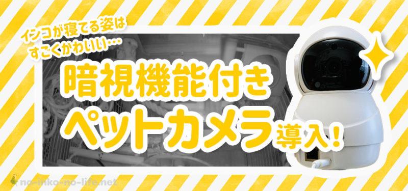 【ペットカメラ】インコが寝てる姿を見たい…!暗視機能付きペットカメラを導入しました!