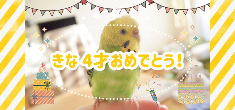 きな4才おめでとう!これまでのきなを動画にまとめたよ(´▽`)