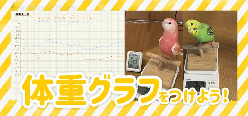 【飼育記録を見える化】体重を測ってグラフをつけよう
