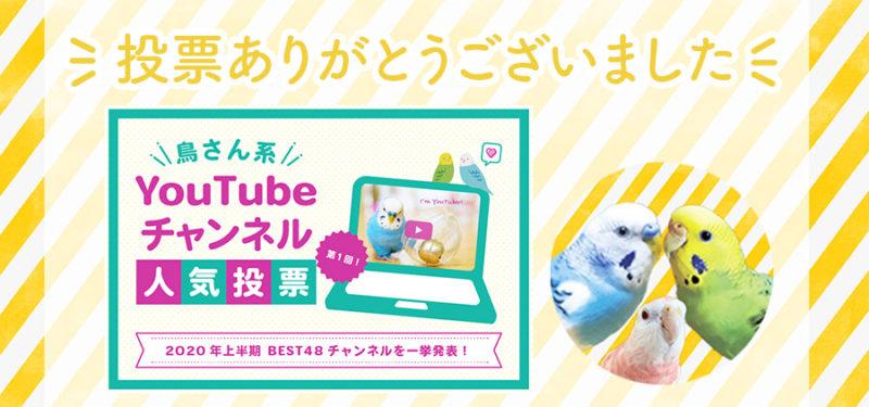 【とりっちcafeさん企画】第1回「鳥さん系YouTubeチャンネル人気投票」で票をいただきました