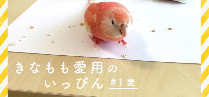 【きなもも愛用のいっぴん】#1 麦(むきオーツ・小麦)
