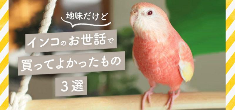 (地味だけど)鳥のお世話で買って良かったもの3選
